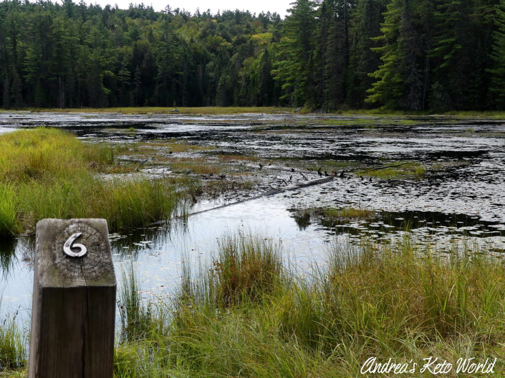 Beaver Pond Trail in Algonquin Provincial Park, ON, Canada